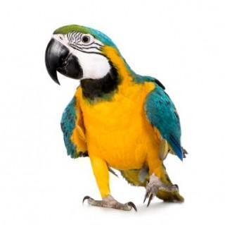 2013bird-iStock_000006022772XSmall